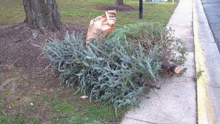 Christmas-tree-recycle
